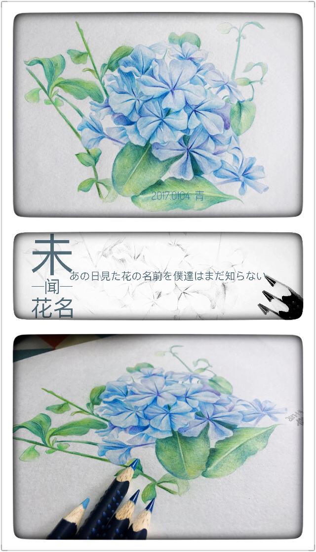 彩铅手绘-未闻花名