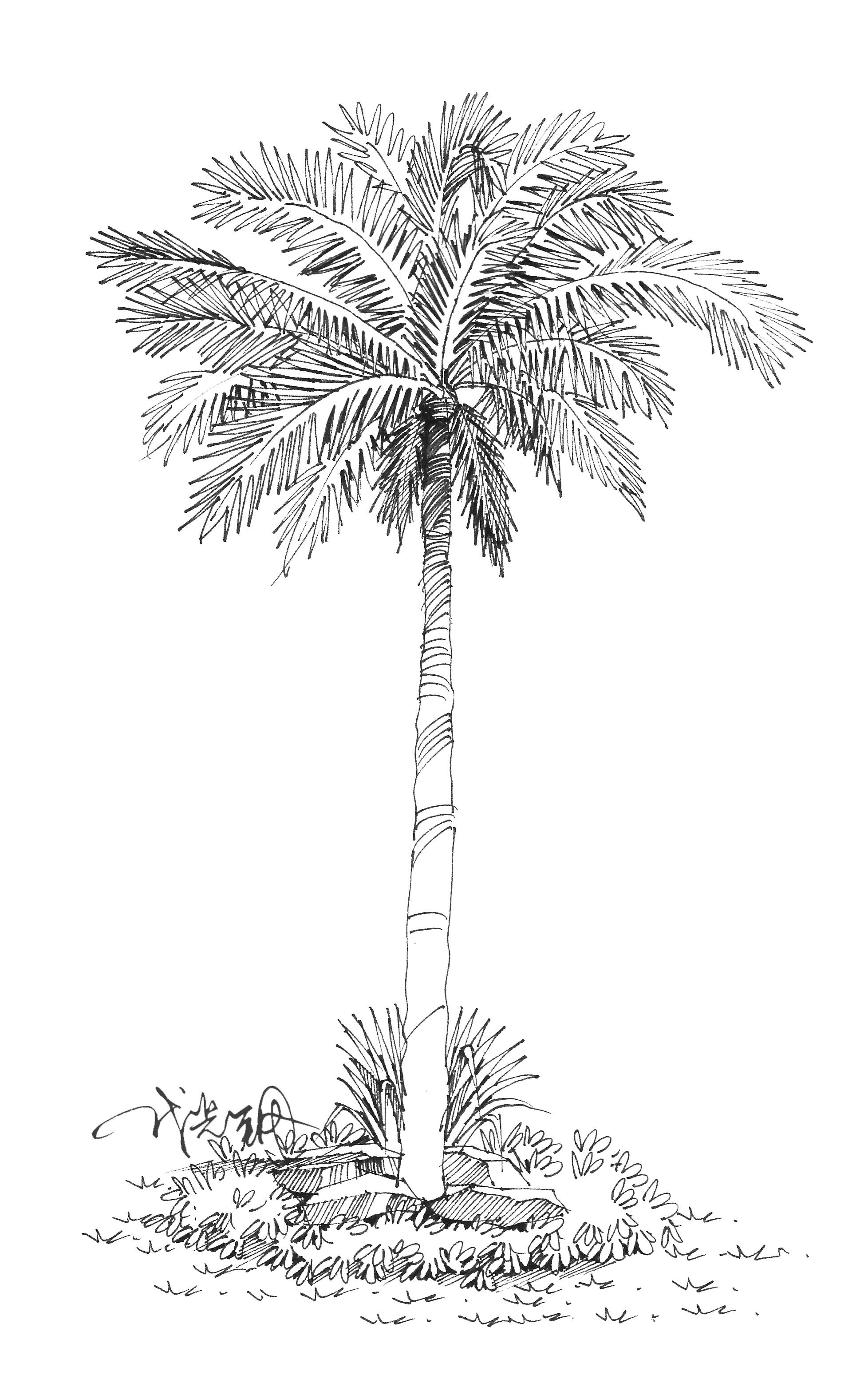 景观设计元素——石头与棕榈的故事