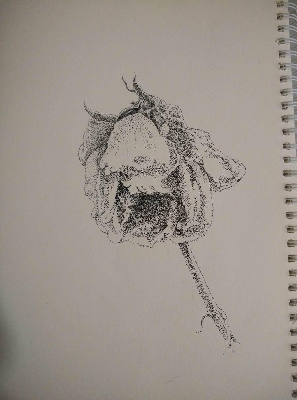 《凋零的花》—钢笔画|绘画习作|插画|小徽