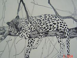 针管笔画:花豹