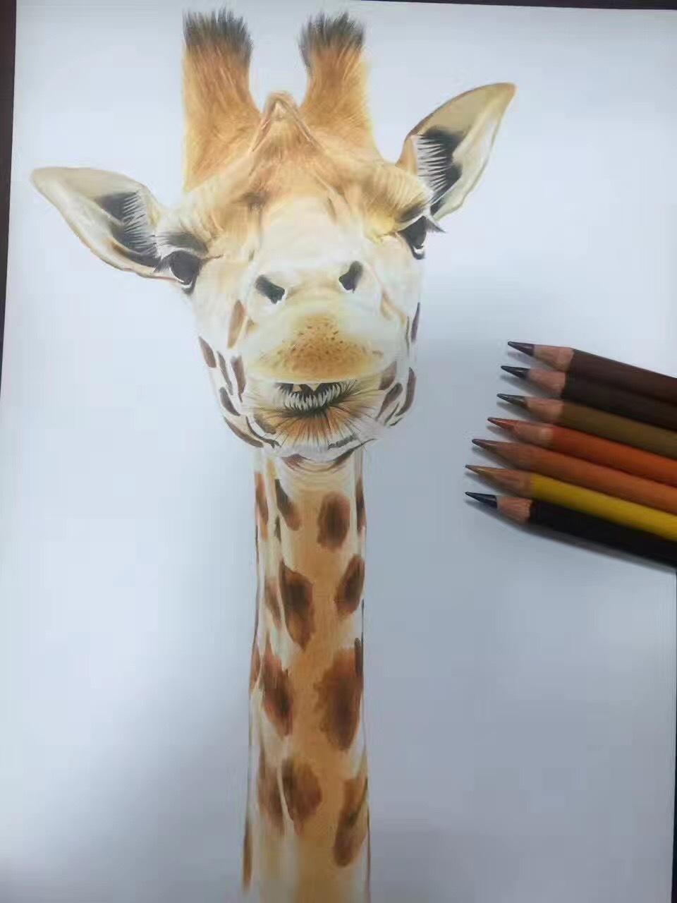 长颈鹿彩铅画_长颈鹿简笔彩铅画 _排行榜大全