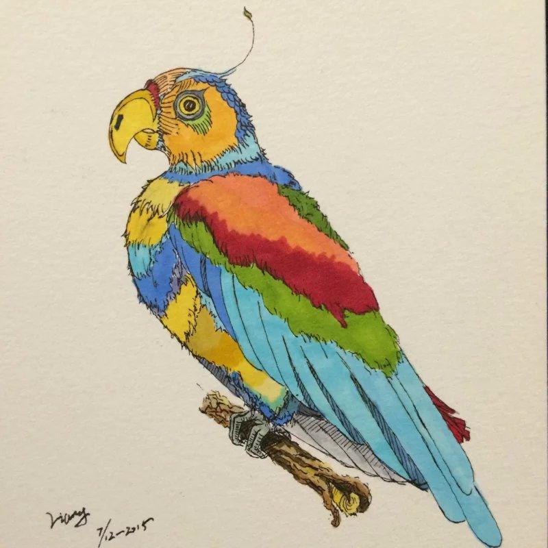 鹦鹉油性彩铅手绘图