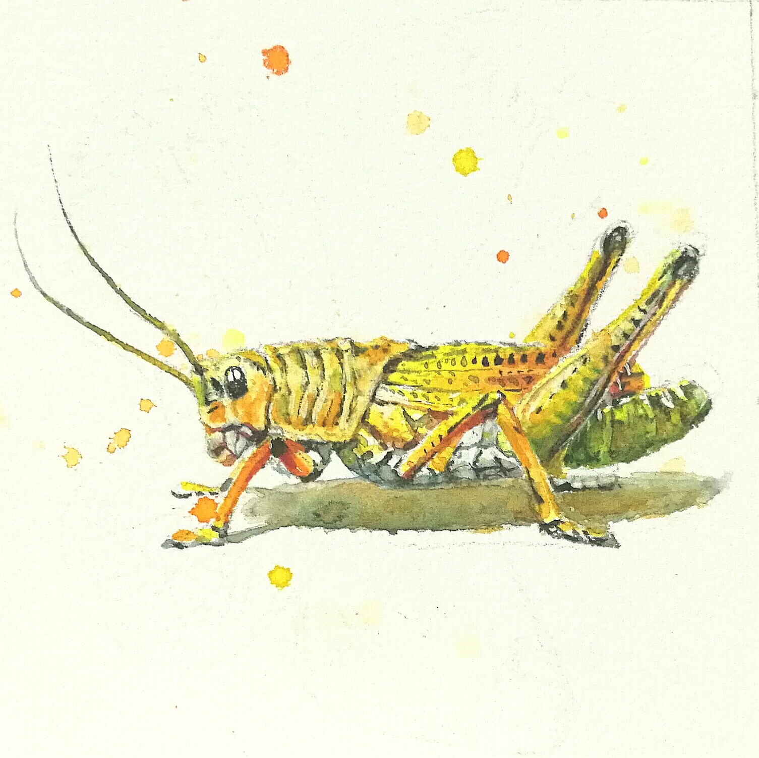 水彩昆虫|纯艺术|水彩|17171717171717
