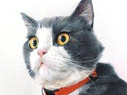 彩铅`步骤`猫星人—《包》