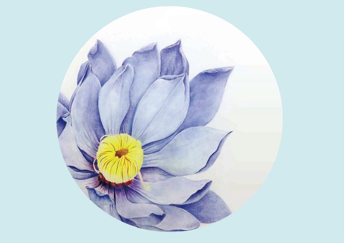 彩铅手绘——花卉