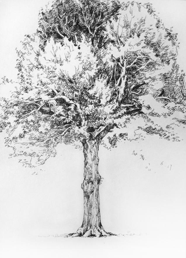 盆栽 树 植物