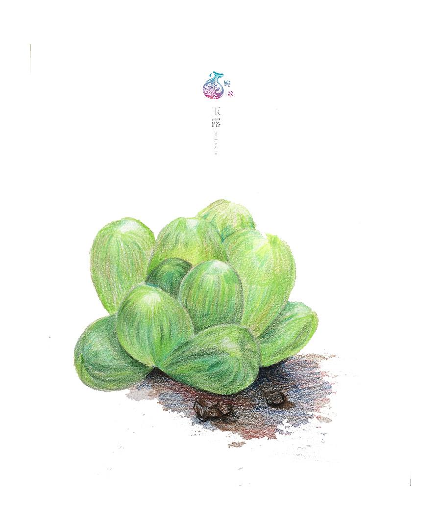 手绘临摹素材植物