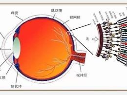 人眼形成视觉的原理