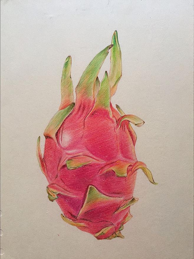 火龙果手绘 临摹