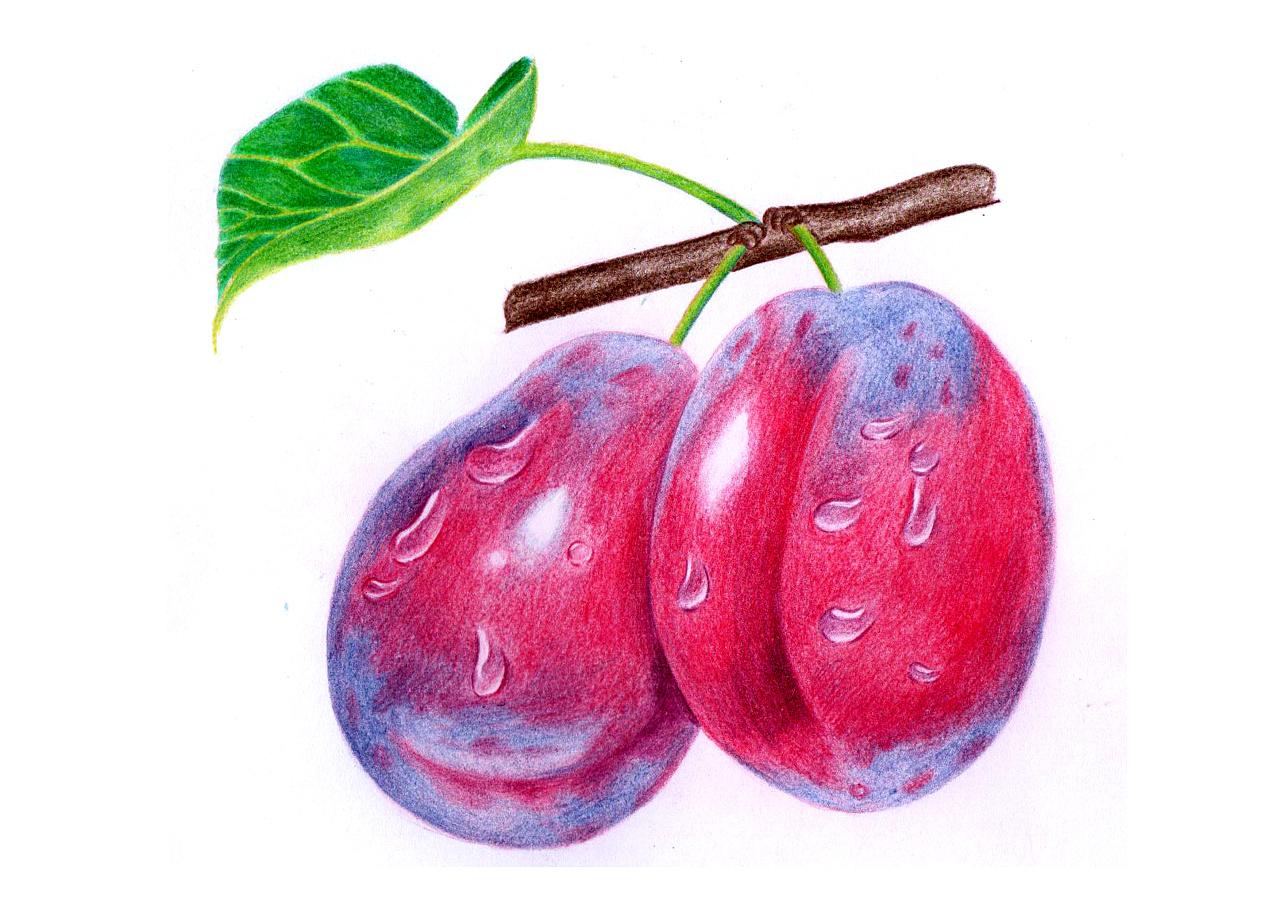 彩铅——水果