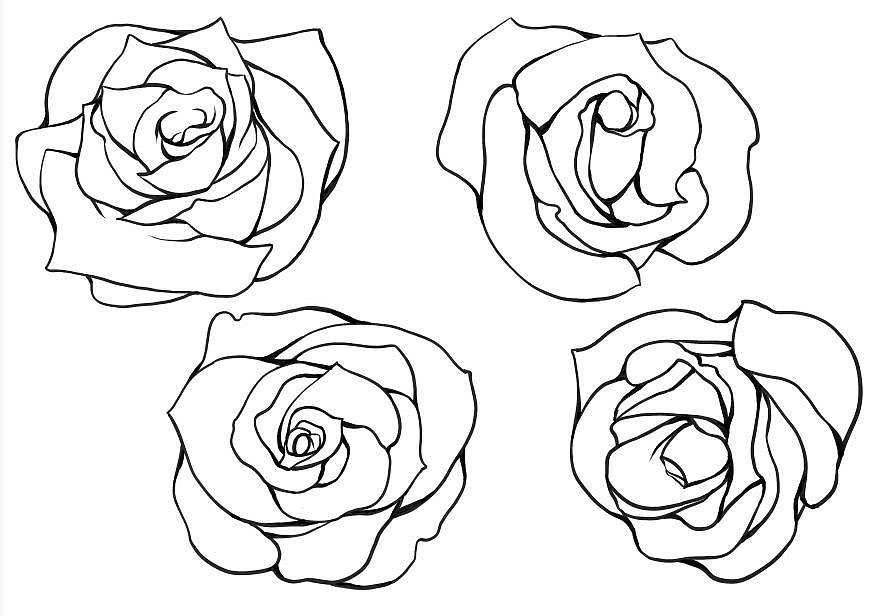玫瑰花 图片