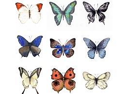 172/365个故事——蝴蝶🦋