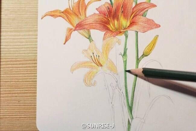 原创彩铅花卉植物