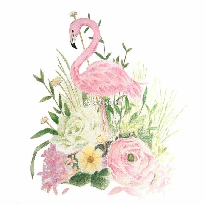 彩铅手绘 火烈鸟