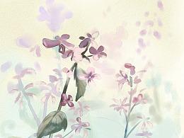 水彩插画-田边的杜芫草