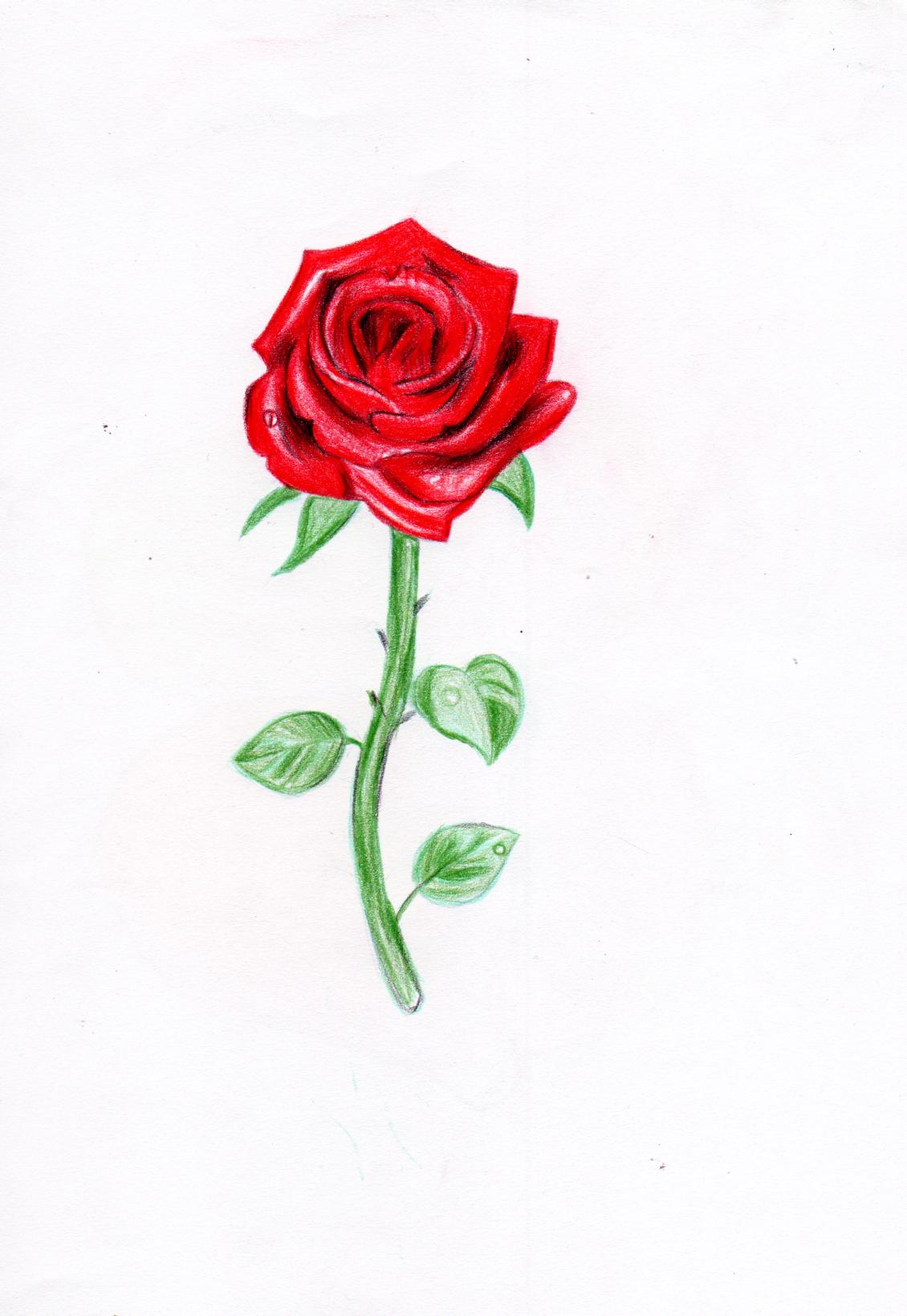 简单手绘玫瑰图案