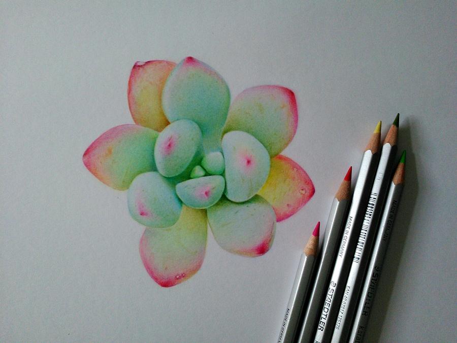 彩铅|纯艺术|子骏手绘 - 原创设计作品