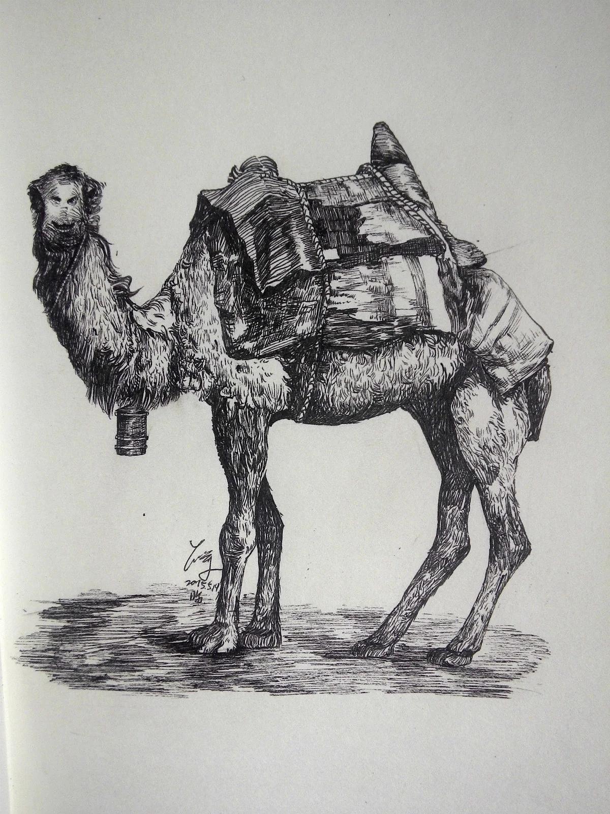 签字笔动物速写素描超写实创作