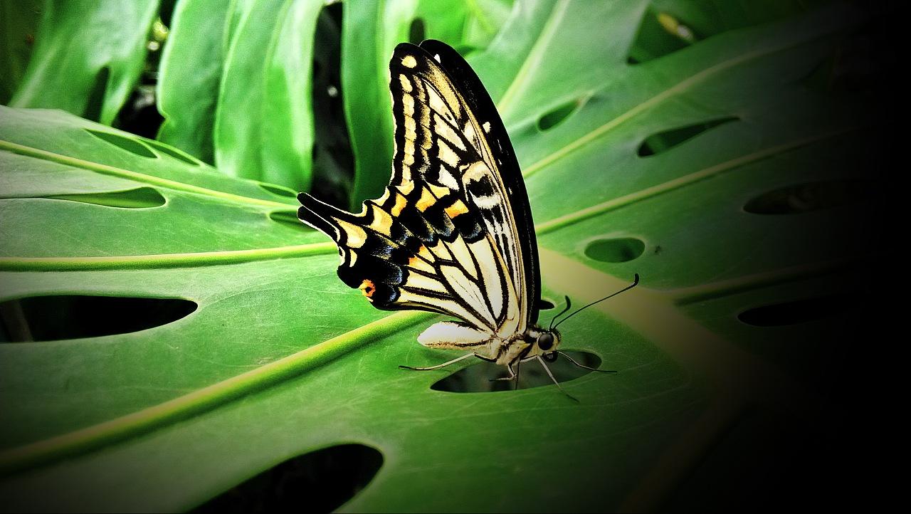 蝴蝶蝴蝶真美丽儿歌歌谱