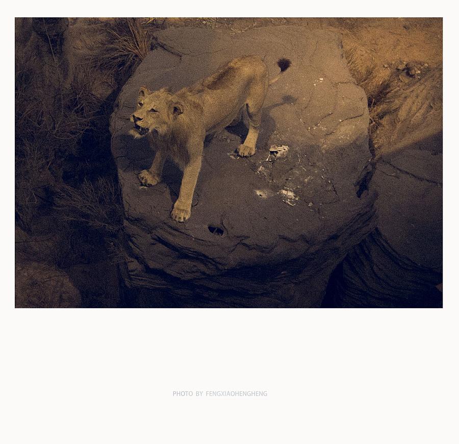 疯狂动物城|风光|摄影|冒牌摄影师