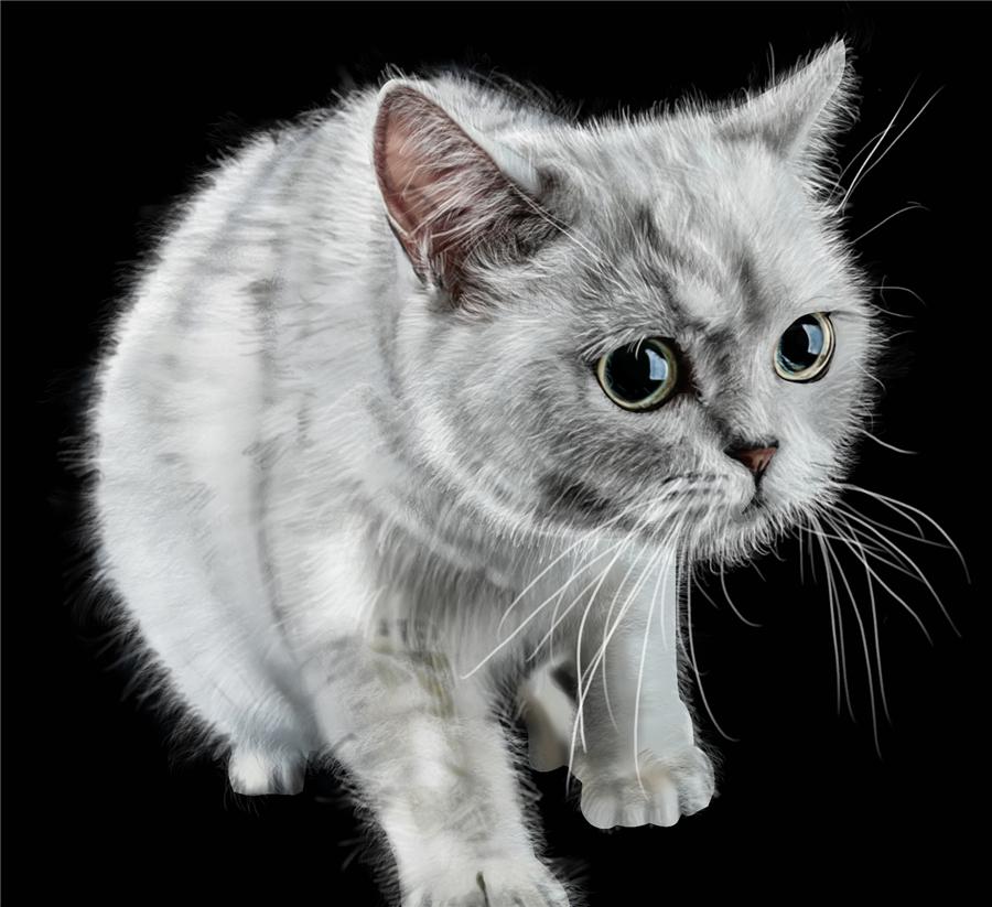 手绘动物世界|绘画习作|插画|mendafan - 原创设计