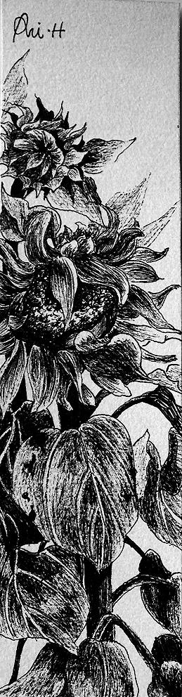 小资的黑白典雅调:新派原创黑白硬笔插画