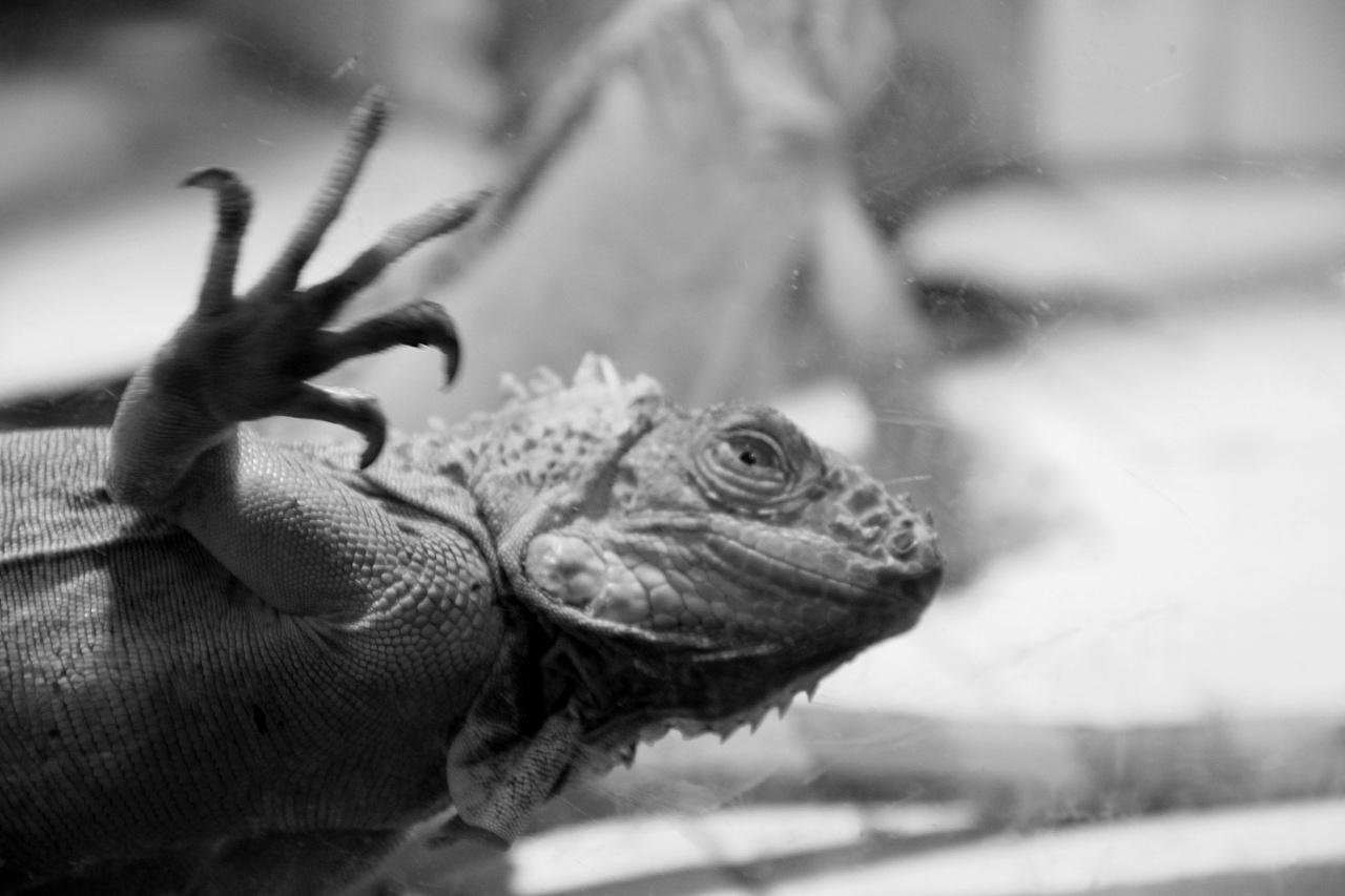 黑白zoo|摄影|动物|lee老师 - 原创作品 - 站酷