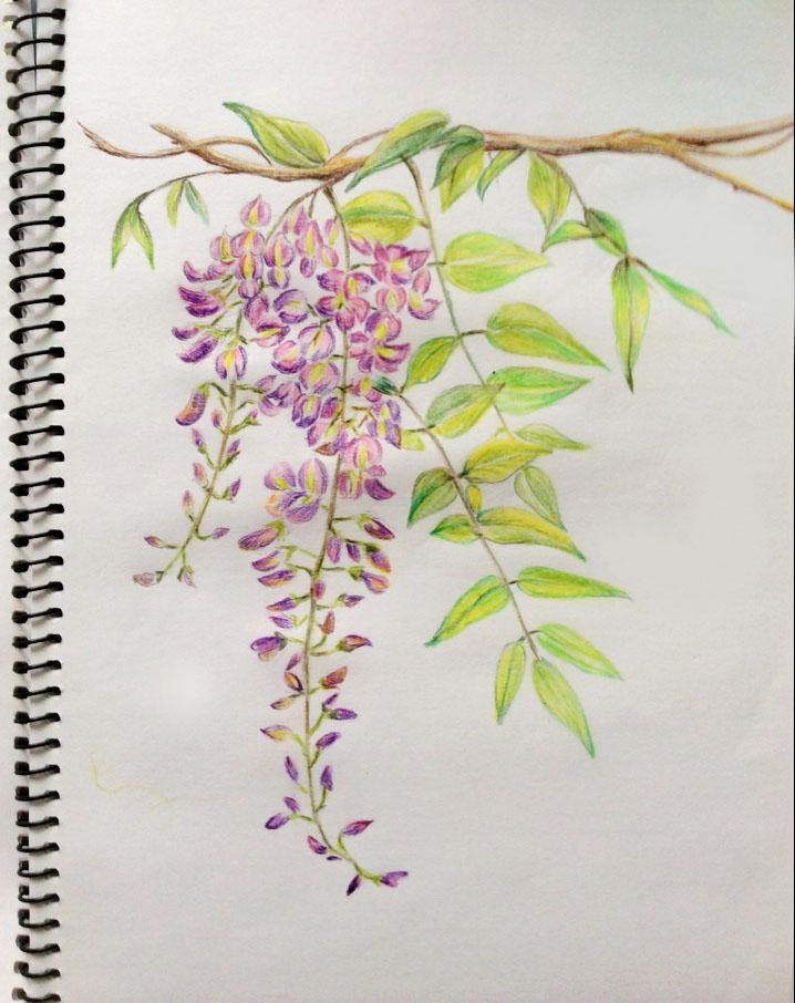 纯手绘练习 (彩铅)|绘画习作|插画|微微yy