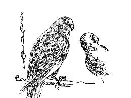线相系列—钢笔画·静物 2