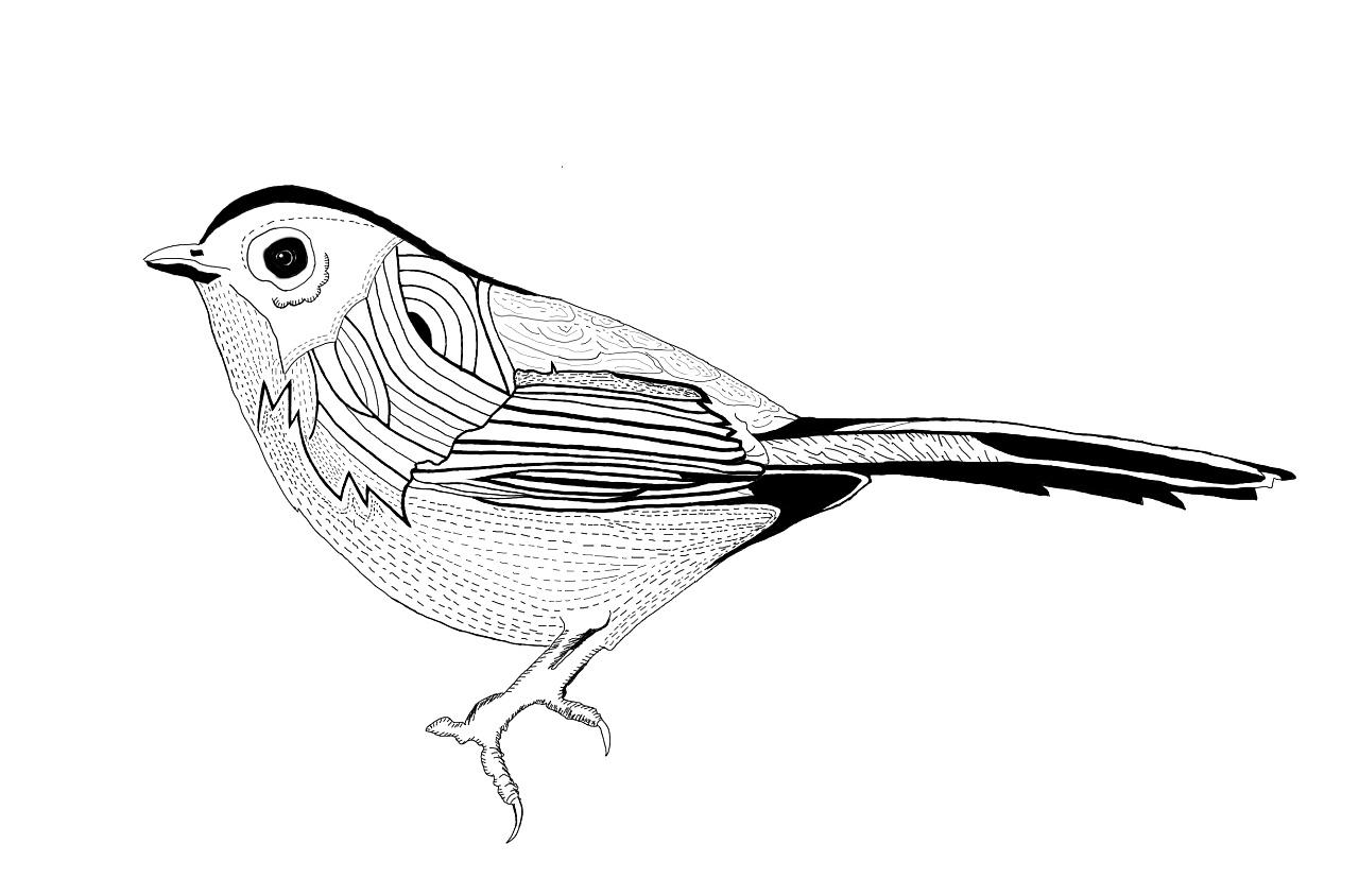 鸟的黑白线稿