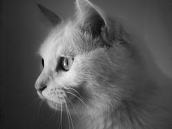 手机摄影丨猫