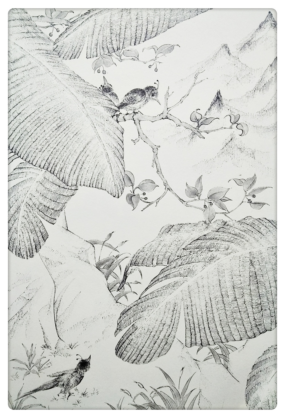 黑白线描风景插画图片