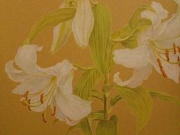 【彩铅花卉】百合香