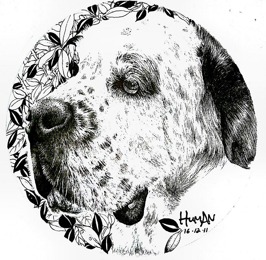 小狗手绘黑白图片