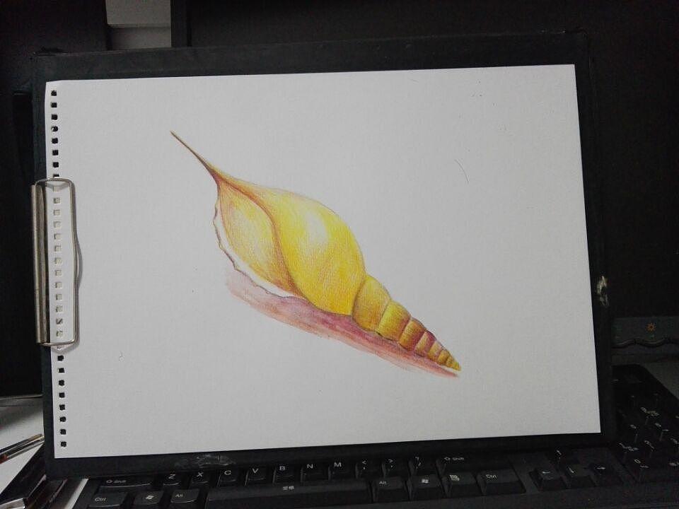 许个愿吧 进击的小海螺|纯艺术|彩铅|光海 - 原创作品