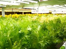 植物灯产品展示视频