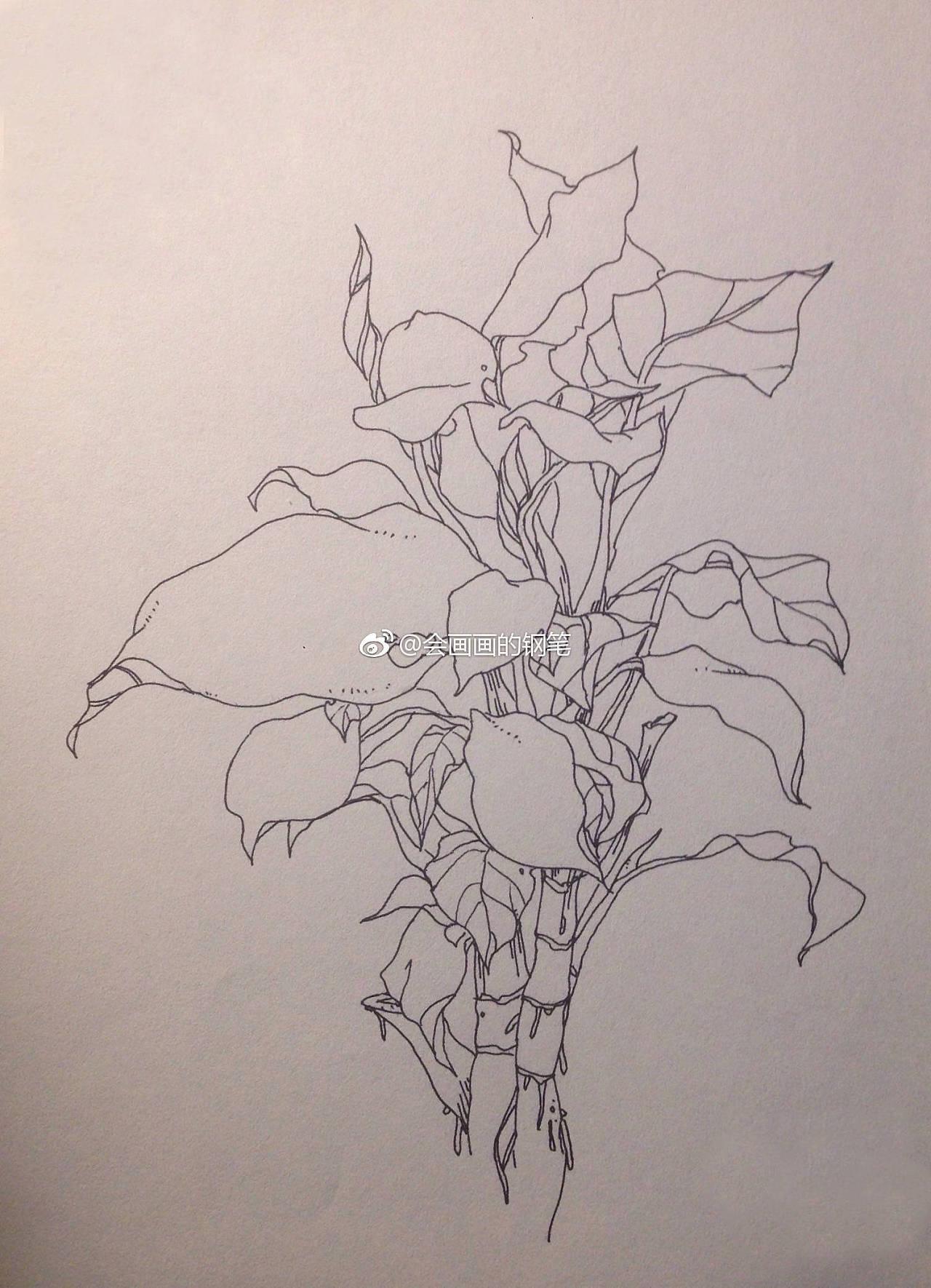 植物线描写生 纯艺术 钢笔画 画画使我快乐 - 原创