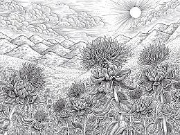 《红花籽油》包装图  手绘