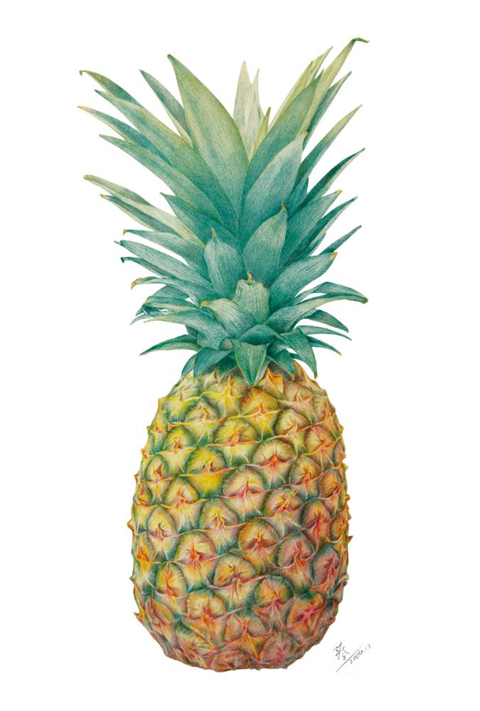 菠萝,彩铅手绘