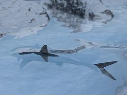 雪山小鱼游动动态