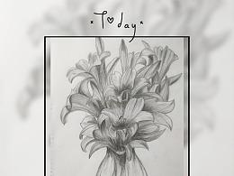 黑白花意-百合