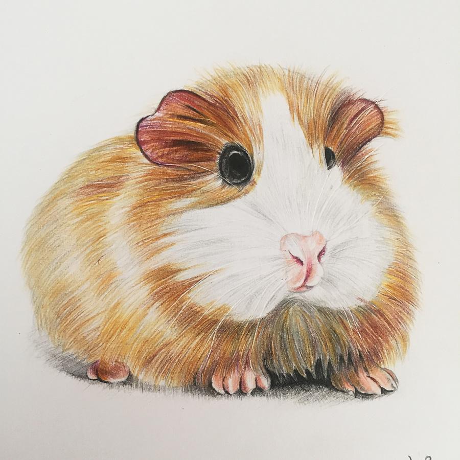 手绘彩铅动物系列|涂鸦/潮流|插画|洛洛7743