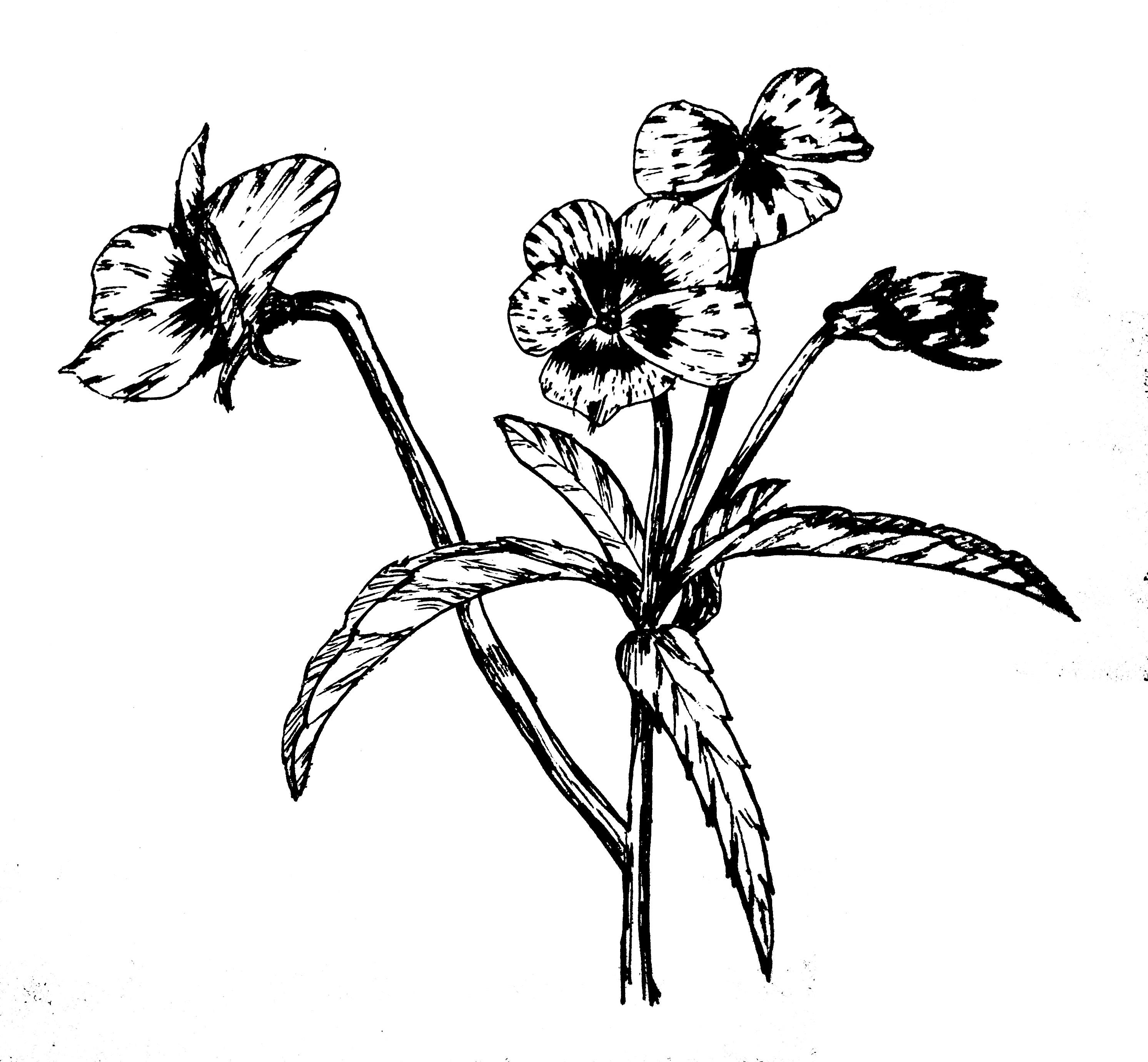 钢笔画花草临摹图片