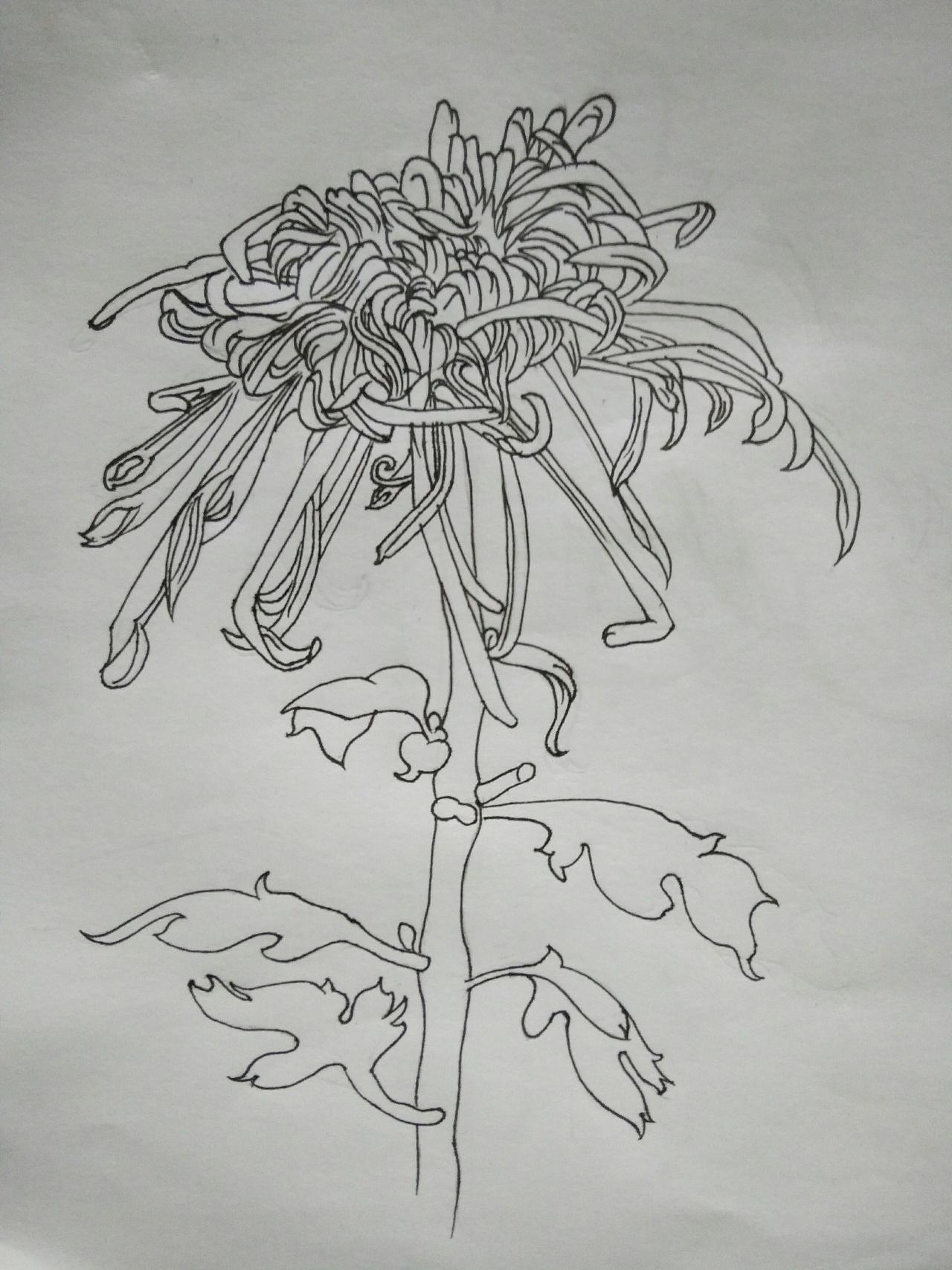 怎样画好针管手绘