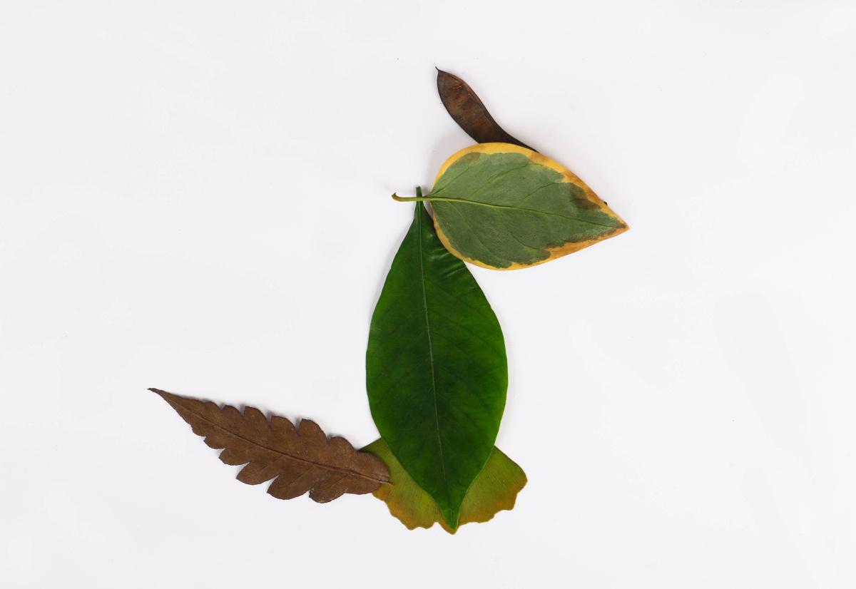 壁纸 动物 昆虫 鸟 摄影 小鸟 桌面 1200_826