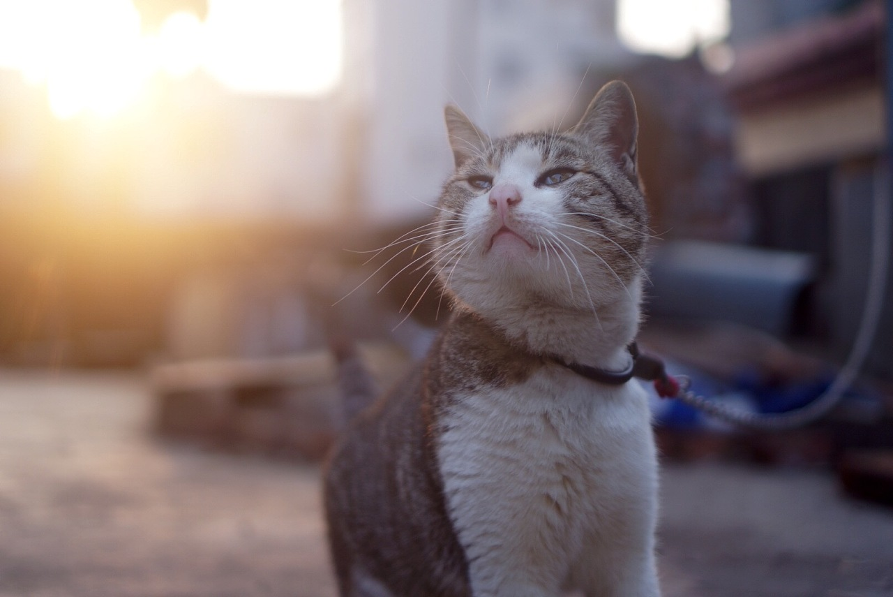 钩针编织肥猫图解