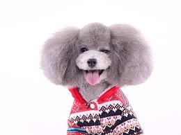 深圳宠物摄影-宠物服装拍摄