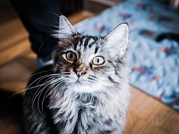 《强扭的猫咪》——丰鸽摄影