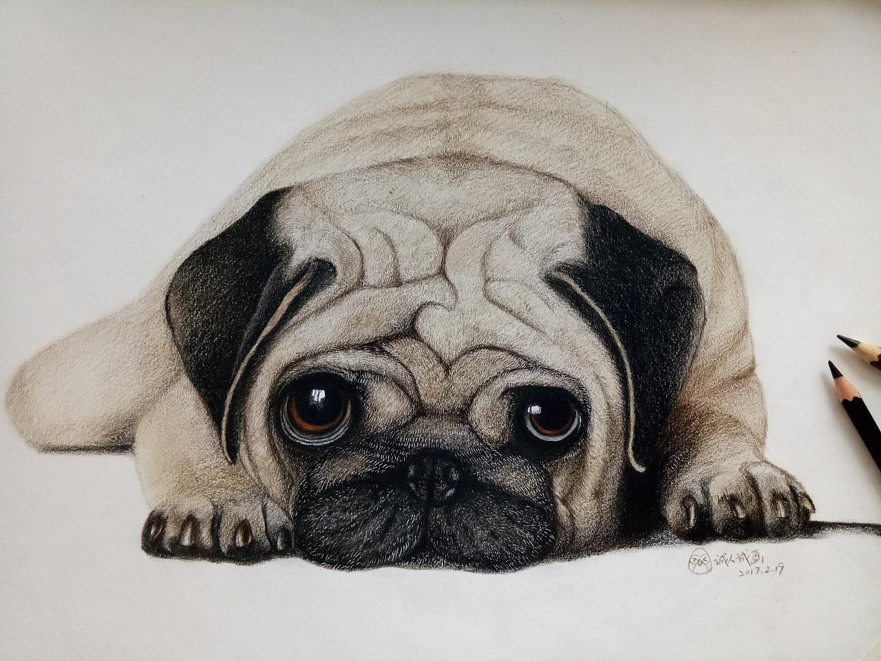 《彩铅手绘——沙皮狗》