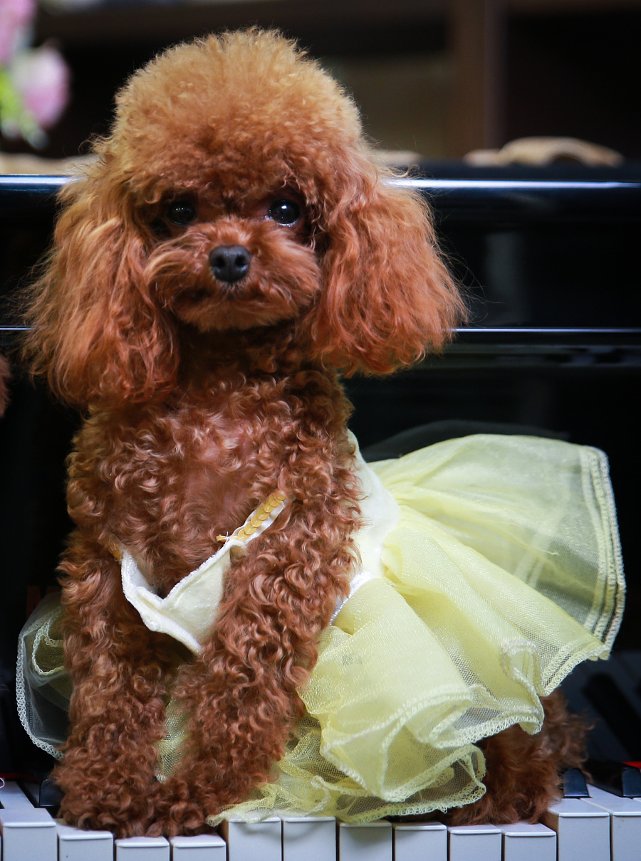 pet宠物摄影】客片——一家三口|宠物/动物|摄影